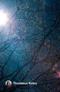Thad Kubis photo